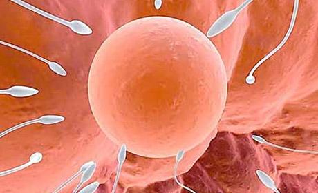 专业讲解:不排卵如何怀孕?