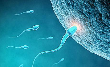 精子异常有以下7种类型,男性要重视起来!
