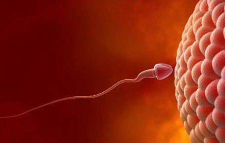 备孕千万别太晚,女人一生最佳受孕机会真的不多