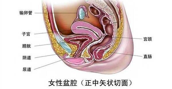 盆腔炎的危害有哪些?盆腔炎会导致不孕吗?