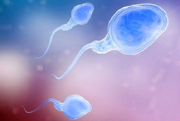 什么是无精症?无精症会导致男性不育吗?